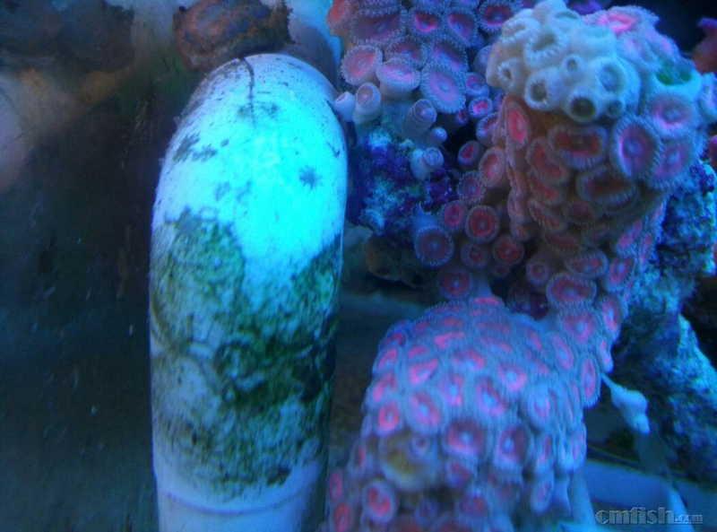 壁纸 海底 海底世界 海洋馆 水族馆 1052_780