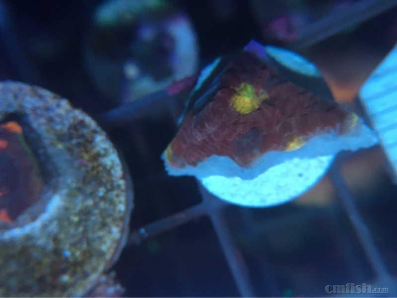 壁纸 动物 海底 海底世界 海洋馆 水族馆 鱼 鱼类 980_735