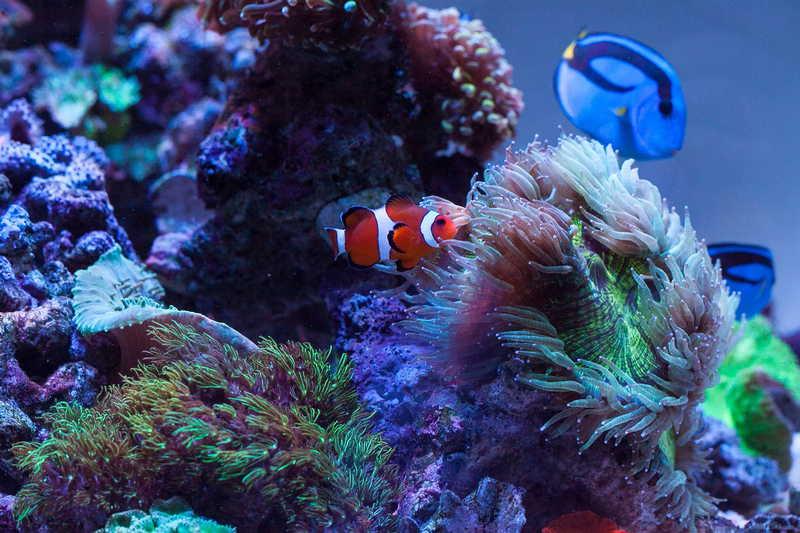 壁纸 海底 海底世界 海洋馆 水族馆 桌面 800_533