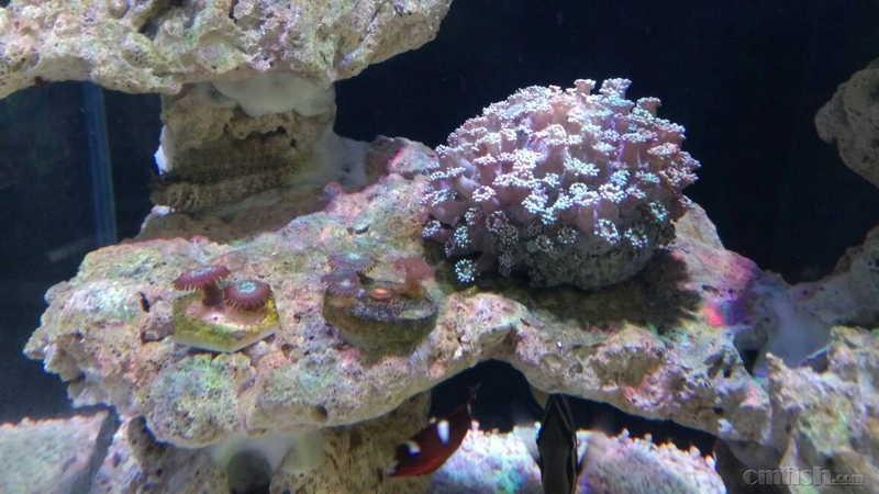 壁纸 海底 海底世界 海洋馆 水族馆 1152_648