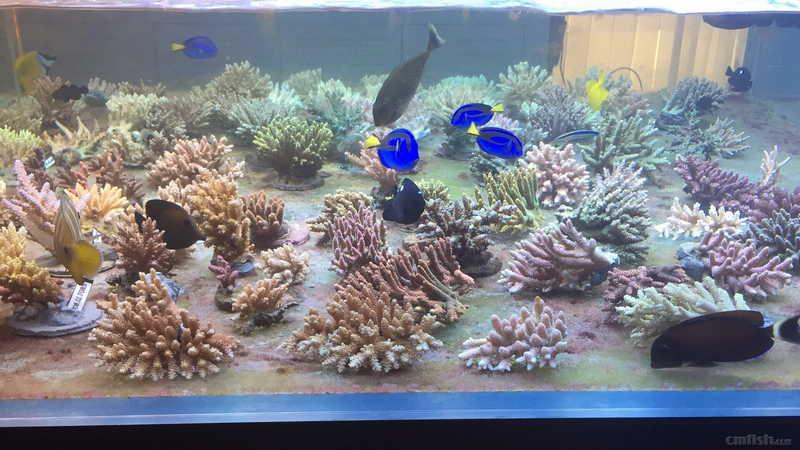 壁纸 海底 海底世界 海洋馆 水草 水生植物 水族馆 1920_1080