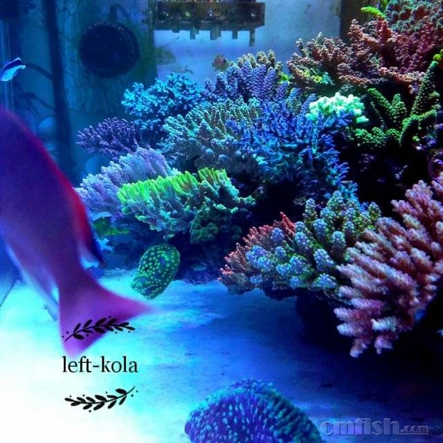 壁纸 海底 海底世界 海洋馆 水族馆 桌面 640_640
