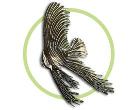 大理石燕鱼