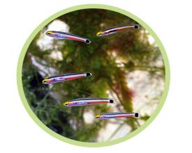 荧光霓虹虾虎