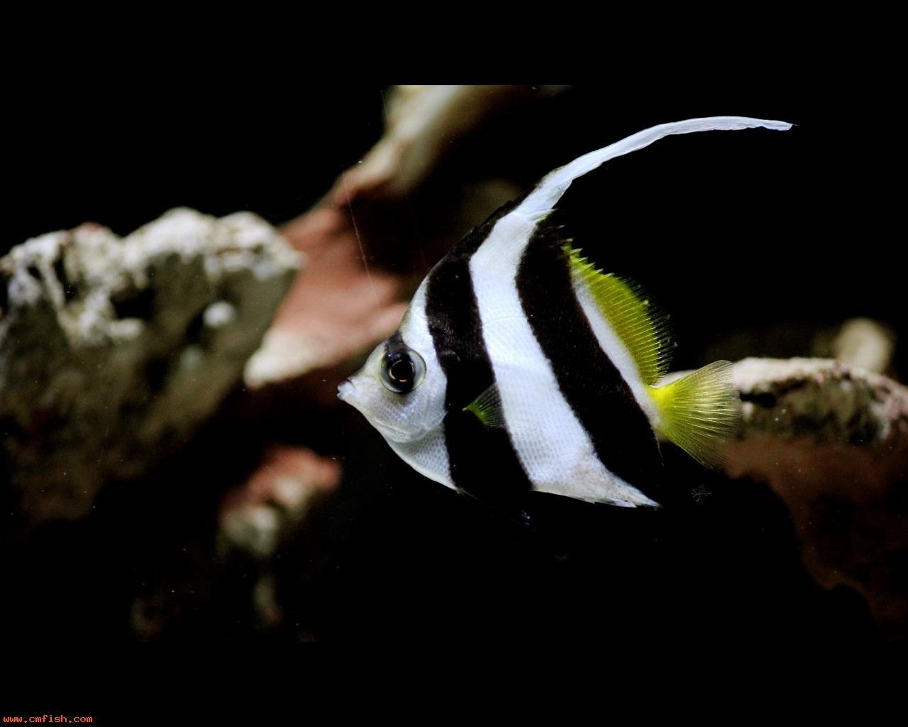 动物 鱼 鱼类 1280